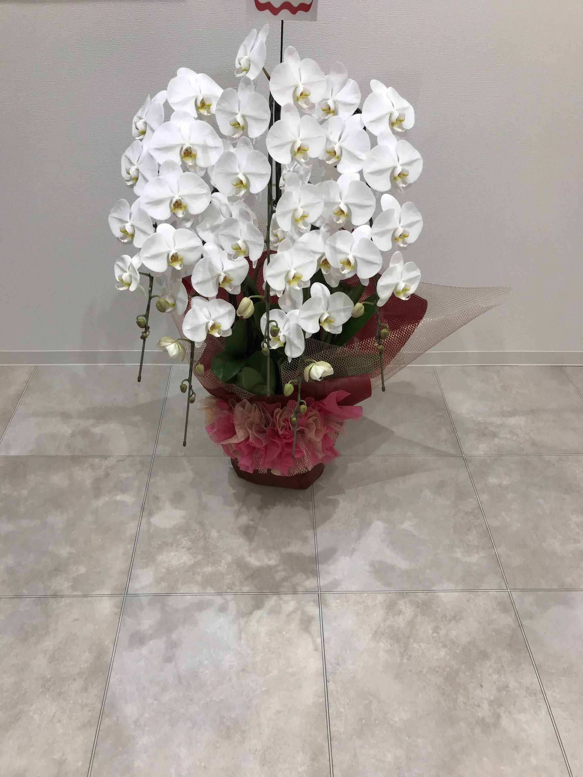 お祝いのお花を頂きました。